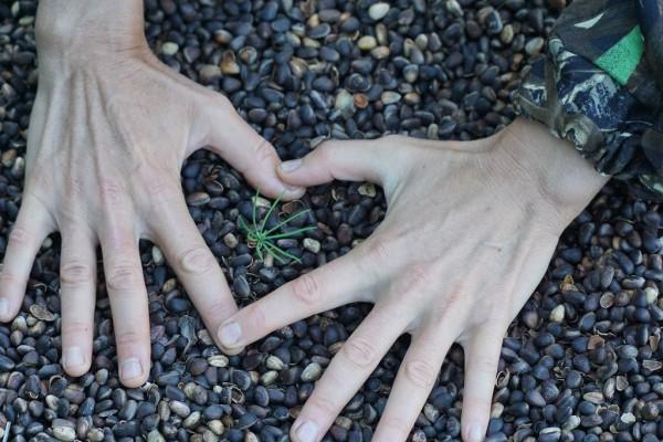 Sibirische Zedernnussschalen 0,5kg